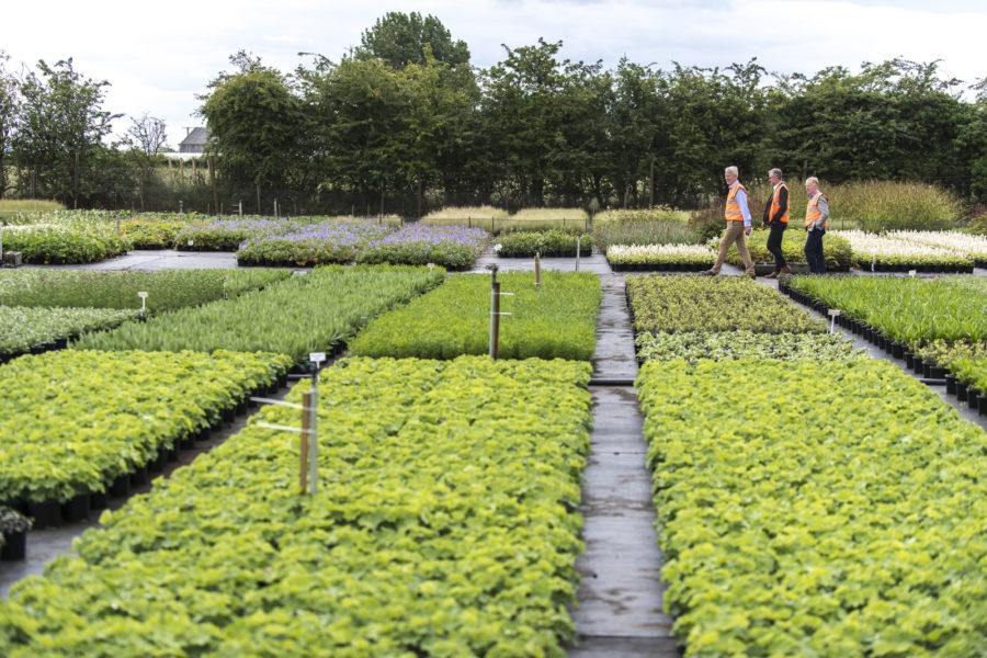 tree nursery rows with workers walking between them
