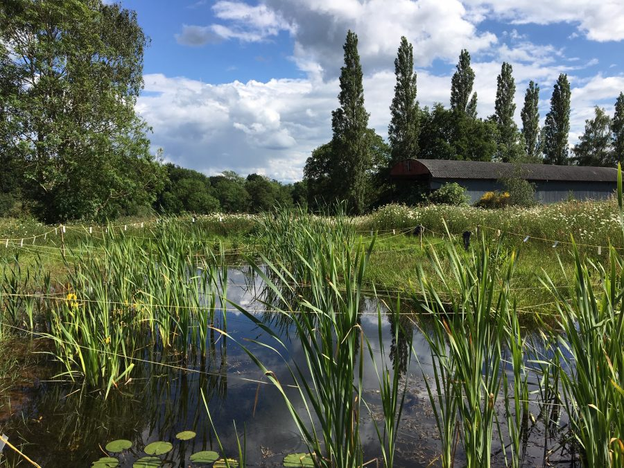 Wetland pond with Dutch barn and poplar trees in the background. An example of how we work at HS2 and the environment improvements we deliver
