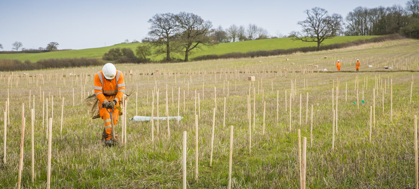 A worker planting trees in a field. the trees are supported by stakes.