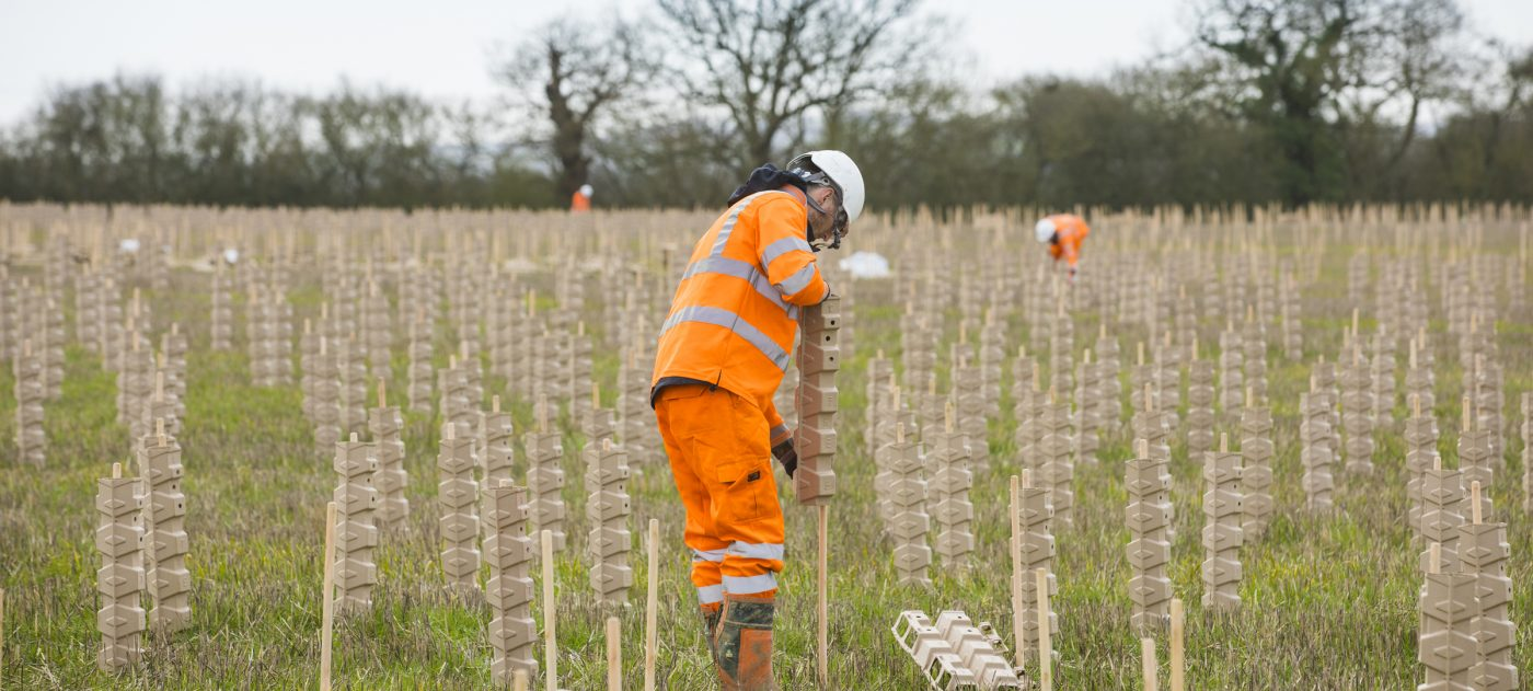 A tree planter prepares stakes and protective casings in a new planting of trees.